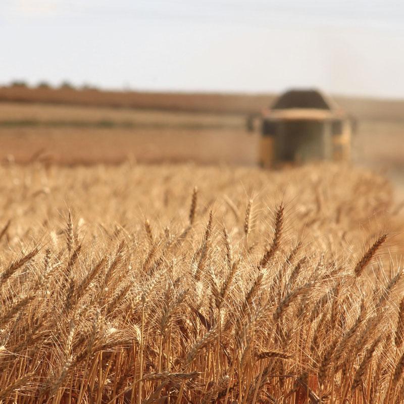 Morton Controls = Grain